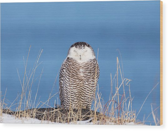 Centered Snowy Owl Wood Print