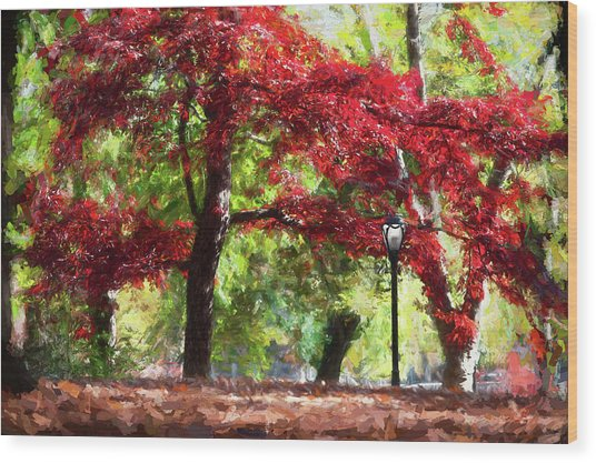 Central Park In Manhattan Wood Print