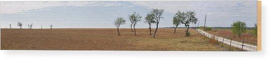 Central Texas Landscape Wood Print