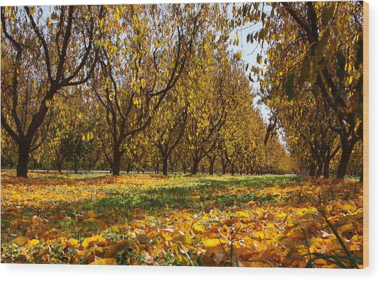Ceres Orchard - Fall Wood Print by Stephen Bonrepos