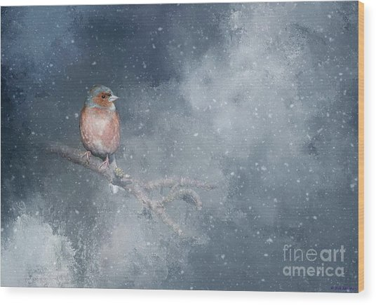 Chaffinch On A Cold Winter Day Wood Print