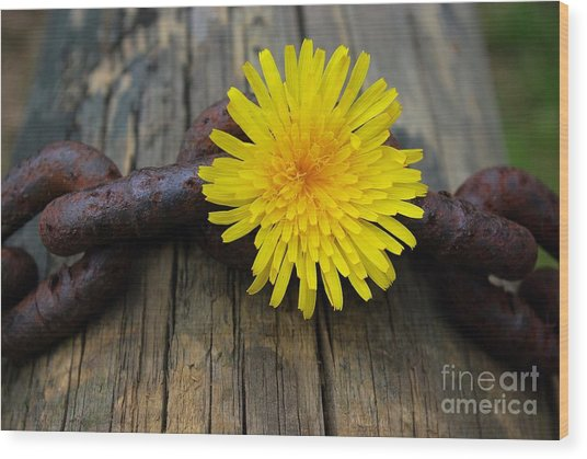 Chained Beauty Wood Print