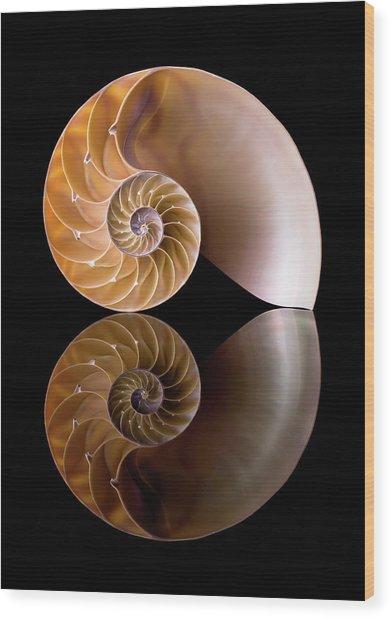 Chambered Nautilus Wood Print