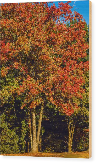 Changing Colors Of Autumn Wood Print by Barry Jones