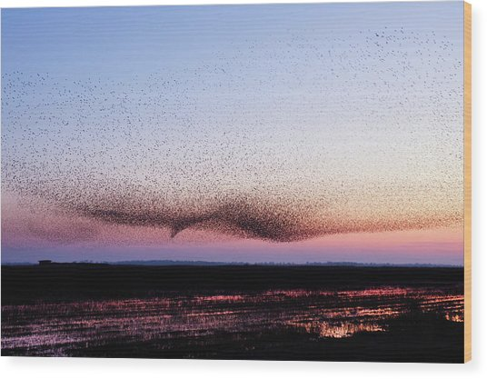 Chaos In Motion - Bird Of Many Birds Wood Print