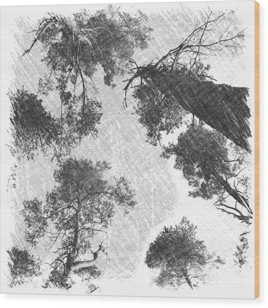 Charcoal Trees Wood Print