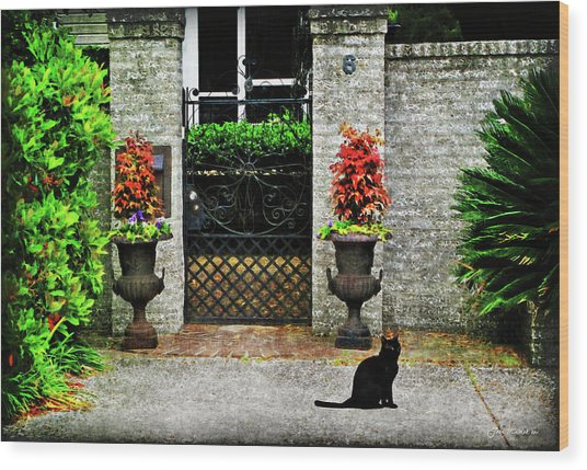 Charleston Cat Wood Print