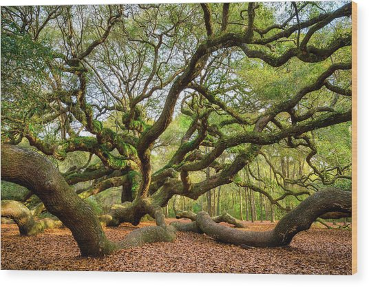 Charleston Sc Angel Oak Tree South Carolina Landscape Wood Print