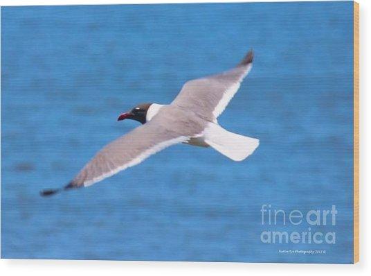 Charleston Wildlife. Seagull Wood Print