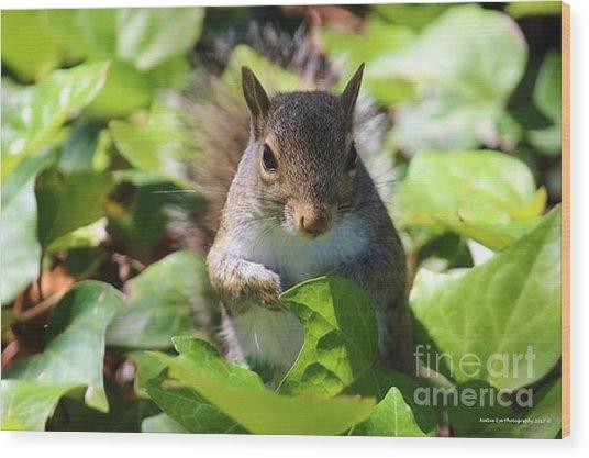 Charleston Wildlife. Squirrel Wood Print
