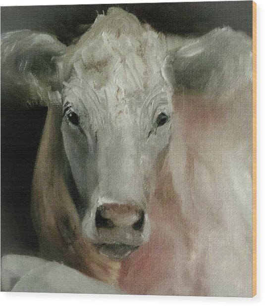 Charolais Cow Painting Wood Print