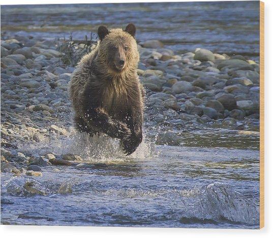 Chasing Salmon Wood Print