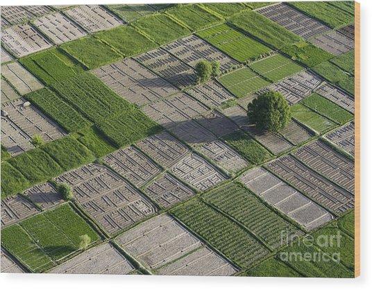 Checker Board Fields Wood Print by Tim Grams