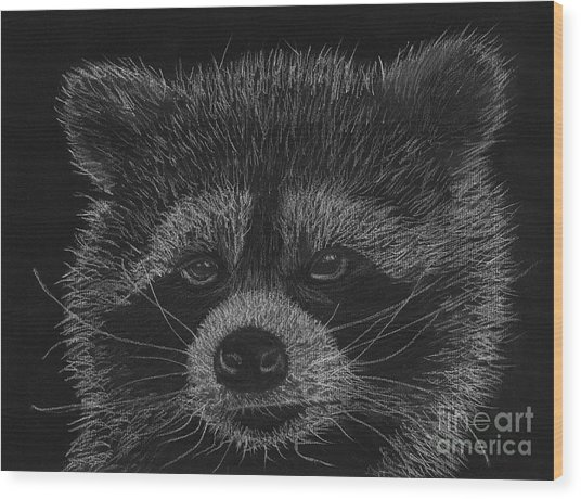 Cheeky Little Guy - Racoon Pastel Drawing Wood Print