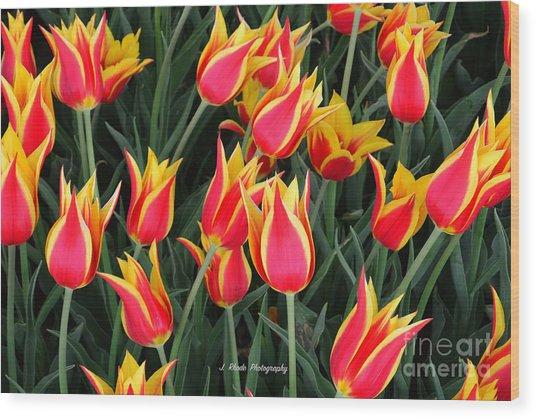 Cheerful Spring Tulips Wood Print