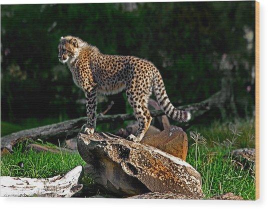 Cheetah Cub Finds Her Pride Rock Wood Print