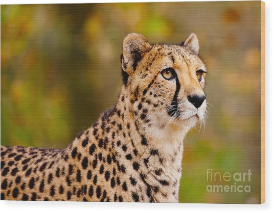 Cheetah In A Forest Wood Print