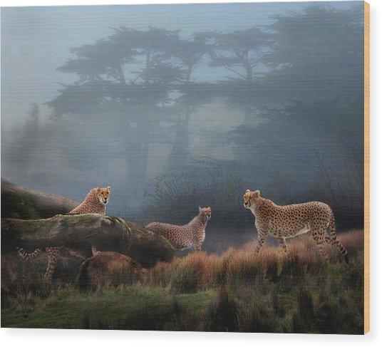Cheetahs In The Mist Wood Print