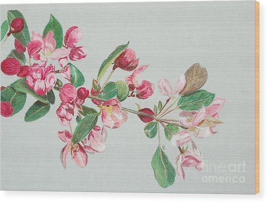 Cherry Blossom Wood Print by Glenda Zuckerman