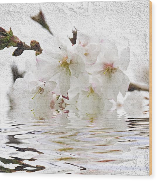 Cherry Blossom In Water Wood Print