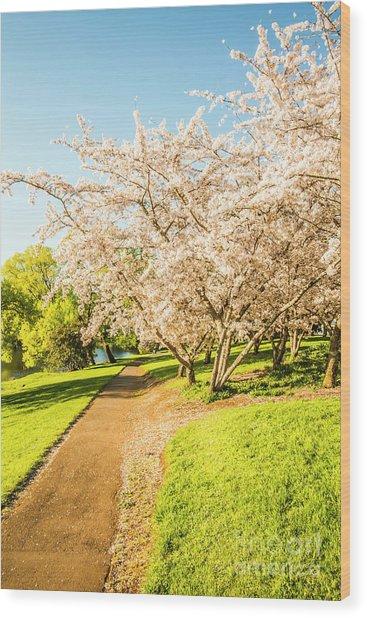 Cherry Blossom Lane Wood Print