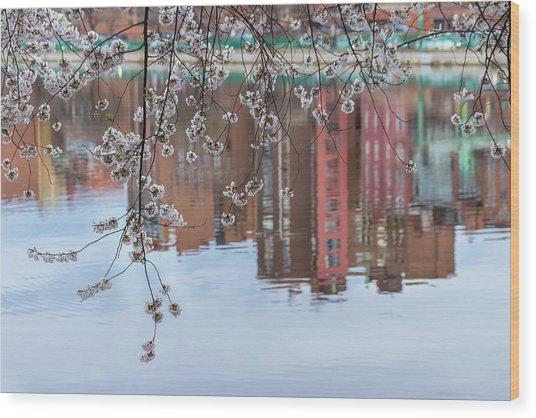 Cherry Blossom Reflections Wood Print