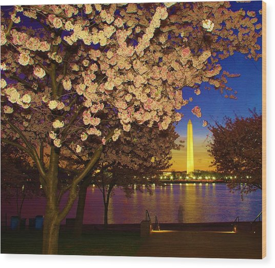 Cherry Blossom Washington Monument Wood Print