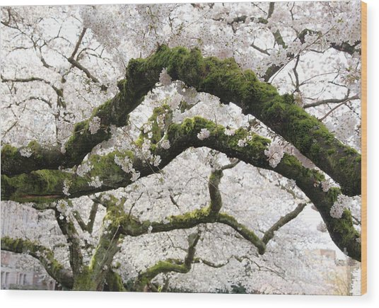 Cherry Blossoms 104 Wood Print