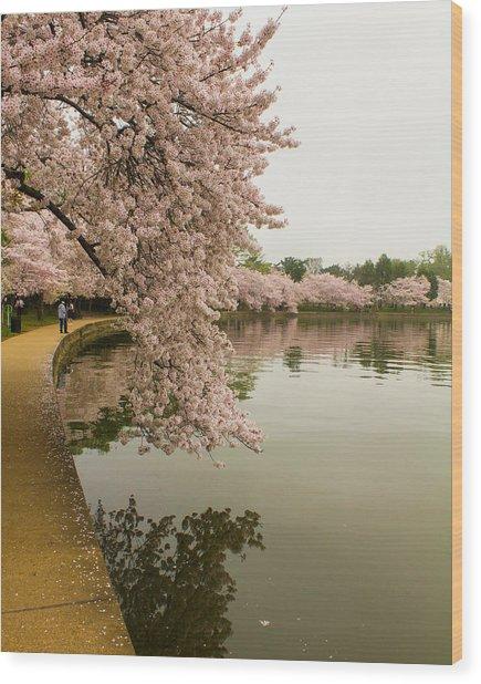 Cherry Blossoms Along The Tidal Basin 8x10 Wood Print