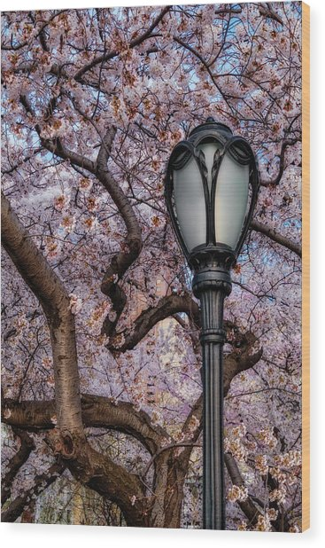 Wood Print featuring the photograph Cherry Blossoms At Central Park Nyc by Susan Candelario