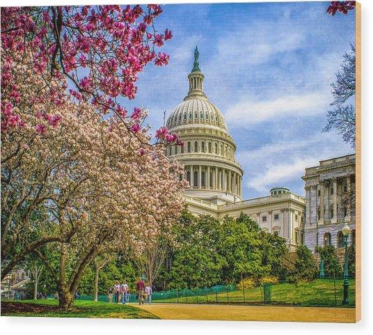 Cherry Blossoms At The Capitol Wood Print