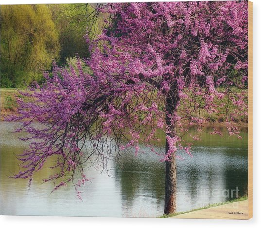 Cherry Blossoms By The Pond Wood Print