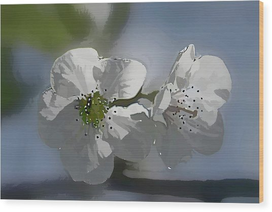 Cherry Blossoms Wood Print by Marti Buckely