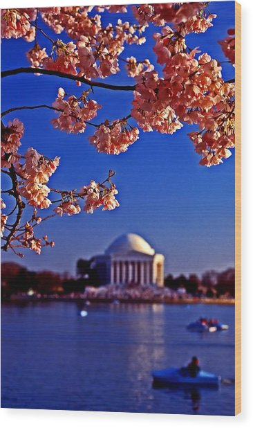 Cherry Blossoms On The Tidal Basin Wood Print
