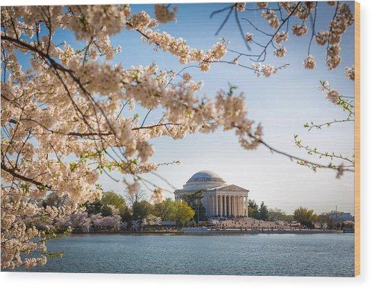 Cherry Blossoms Wood Print by Robert Davis