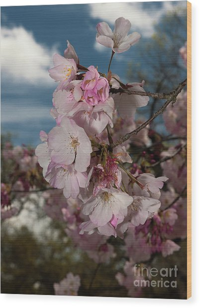 Cherry Blossoms Vertical Wood Print