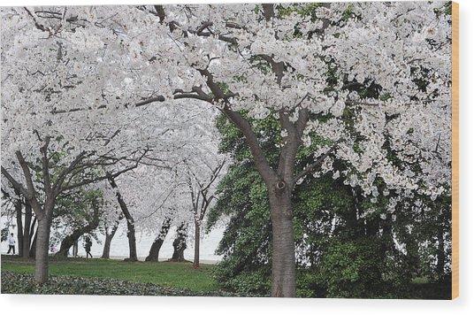 Cherry Blossoms Washington Dc Wood Print