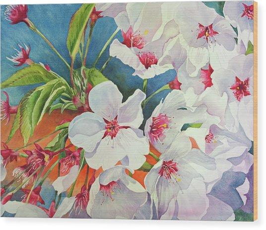 Cherry Blossomsa Wood Print