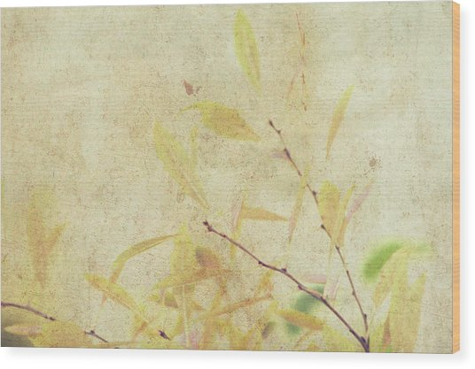 Cherry Branch On Rice Paper Wood Print