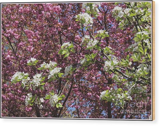 Cherry Tree And Pear Blossoms Wood Print