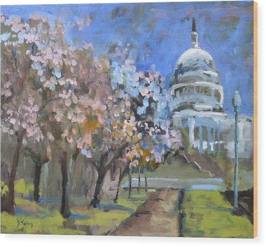 Cherry Tree Blossoms In Washington Dc Wood Print