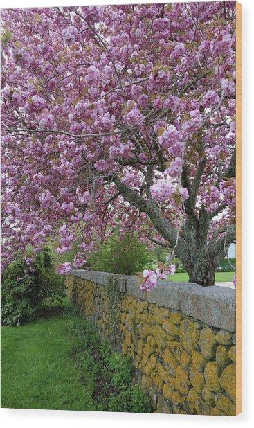 Cherry Tree, Cape Cod Wood Print