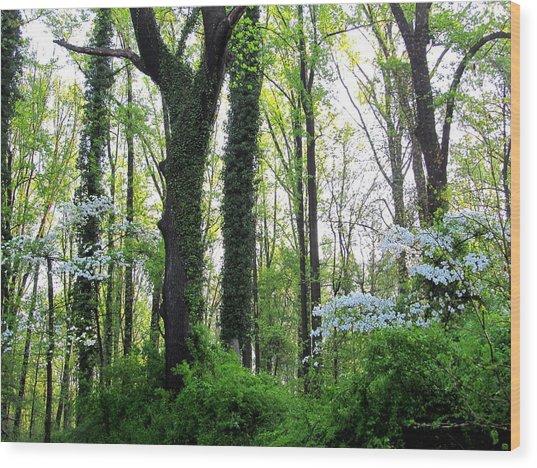 Chesapeake Oldgrowth Forest Wood Print