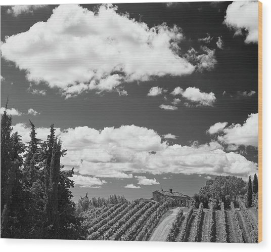 Chianti Vineyards Wood Print