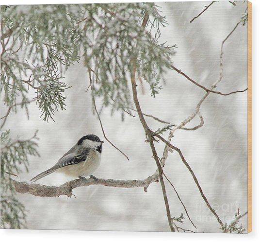 Chicadee In A Snow Storm  Wood Print