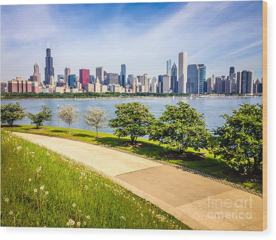 Chicago Skyine And Lakefront Trail Wood Print by Paul Velgos
