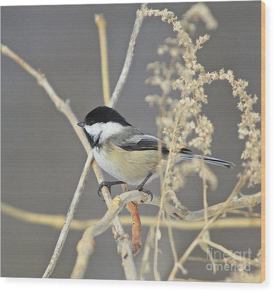 Chickadee-8 Wood Print