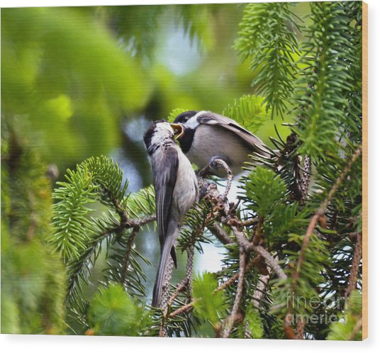 Chickadee Feeding Time Wood Print