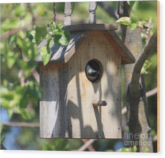 Chickadee In Birdhouse Wood Print
