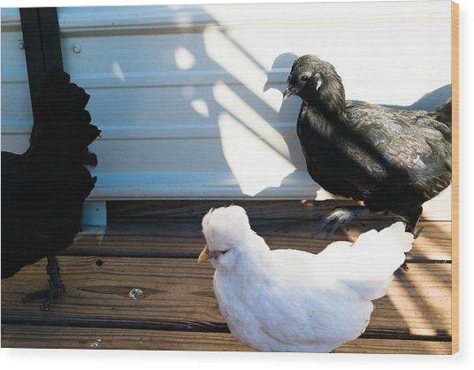 Chicken 1 Wood Print by Wattie Wildcat